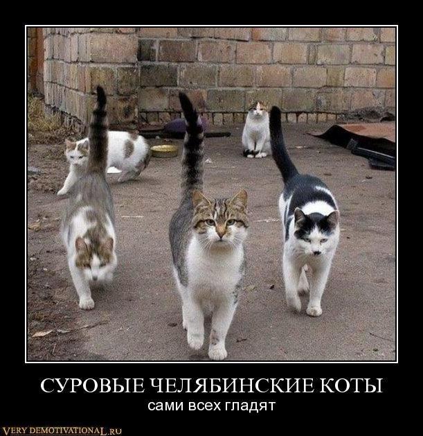 Челябинск → суровые челябинские коты