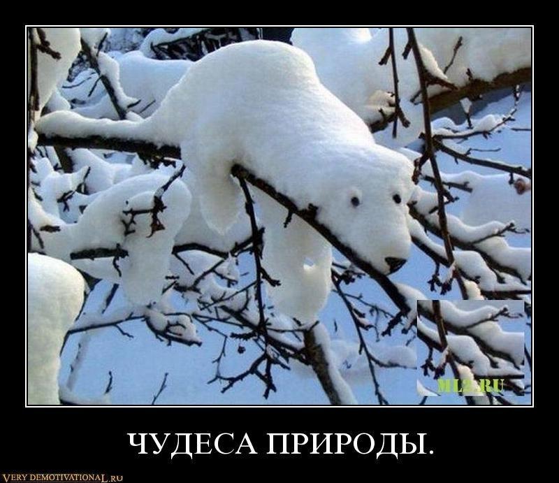 Разное → демотиватор чудеса природы
