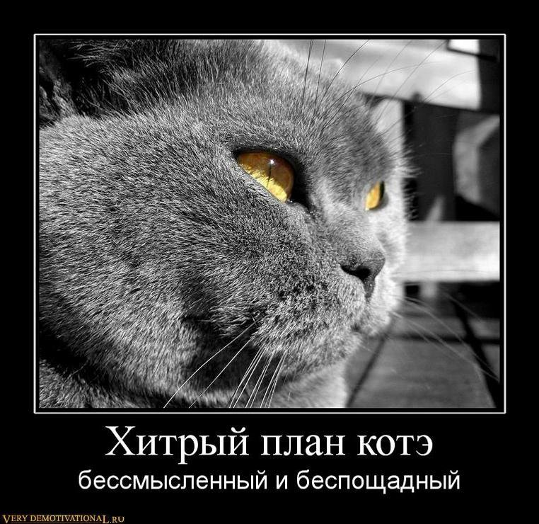 подборка от стасевича 1298544292_270728_hitryij-plan-kote