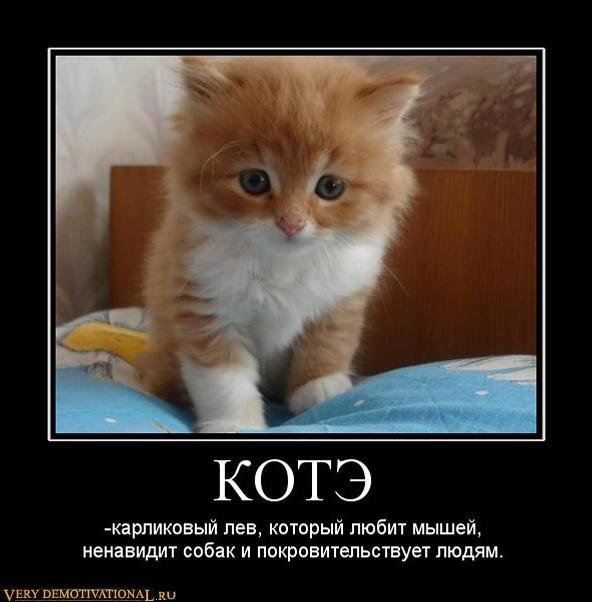 http://verydemotivational.ru/uploads/posts/2011-02/1298545105_314230_kote.jpg