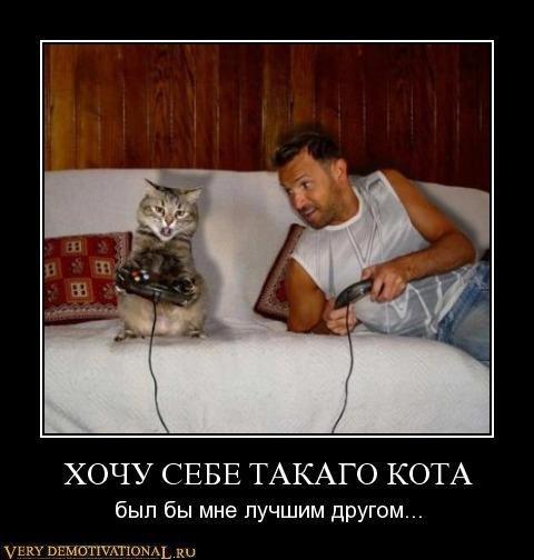 Котэ → хочу себе такого кота был бы
