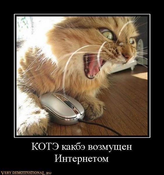 подборка от стасевича 1298637099_37660_kote-kakbe-vozmuschen-internetom
